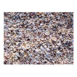 Sea Shells Sanibel Island Florida Postcard
