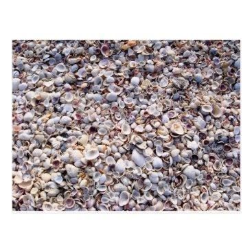 DarkChocolateQueen Sea Shells Sanibel Island Florida Postcard