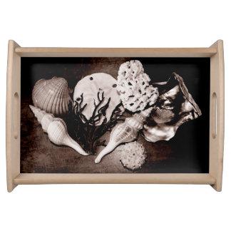 Sea Shells Sepia Still Life Serving Platter