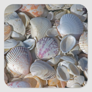 Sea Shells Square Sticker