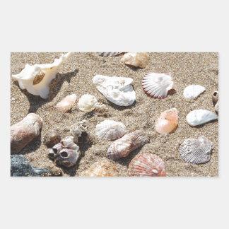 Sea shells. sticker