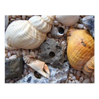 Sea Shells Upon the Beach Postcard