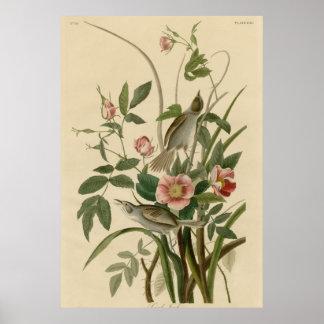 Sea side Finch Print
