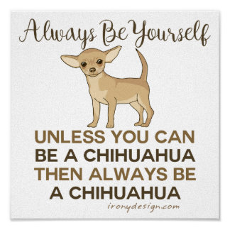 Sea siempre una chihuahua póster