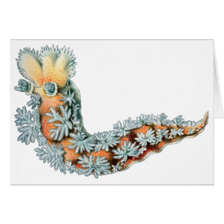 Sea Slug Card
