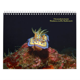 Sea Slugs 2015 Calendar