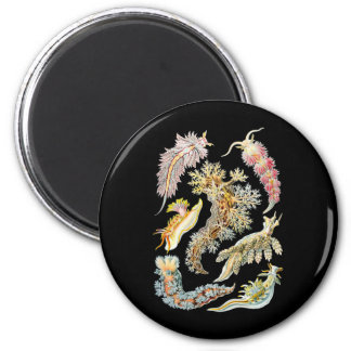Sea slugs 2 inch round magnet
