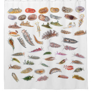 Sea slugs from Britain Shower Curtain