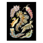 Sea slugs post card