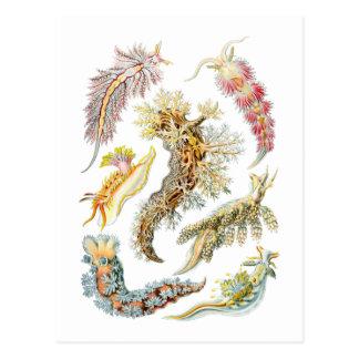 Sea slugs postcard