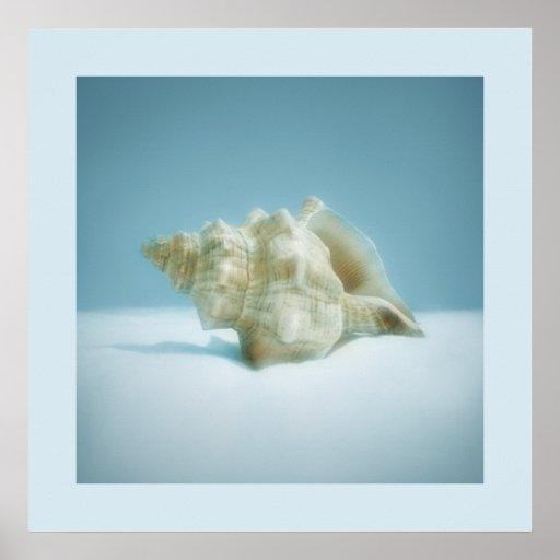 Sea Snail - poster