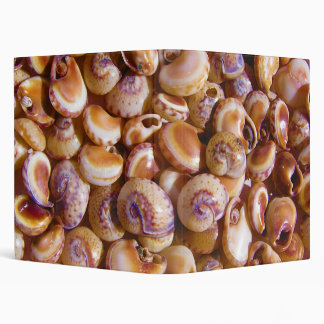 Sea Snail Shells Cyclops Nassa Cyclope Pellucidus 3 Ring Binder