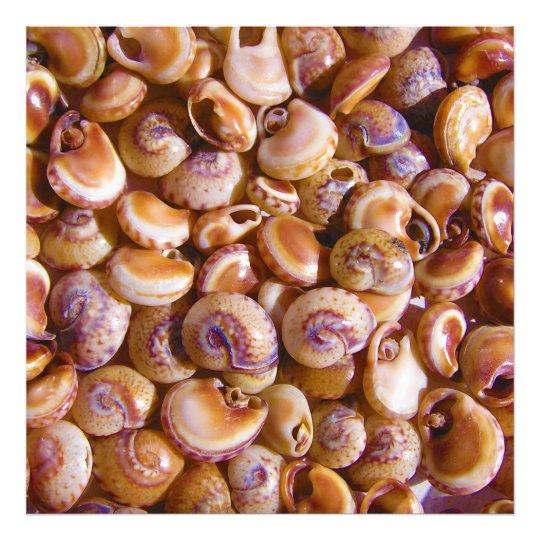 Sea Snail Shells Cyclops Nassa Cyclope Pellucidus Photo Print