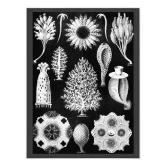 Sea Sponge Cream on Black Photo Print