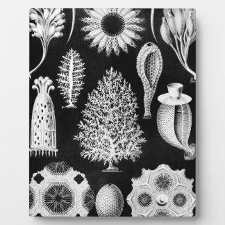 Sea Sponge Cream on Black Plaque