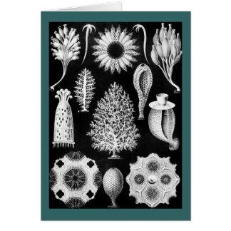 Sea Sponge in Cream and Black Card