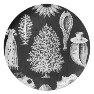 Sea Sponge in Cream and Black Plate