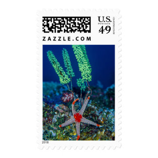 Sea Star and Tunicate Postage