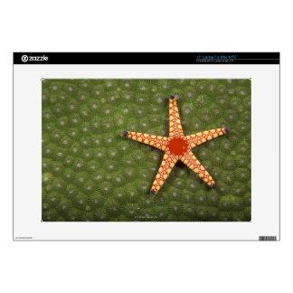 "Sea star cleaning reefs by eating algae 15"" laptop decals"