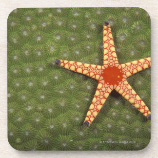 Sea star cleaning reefs by eating algae coaster