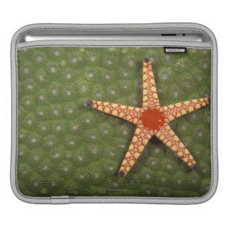 Sea star cleaning reefs by eating algae iPad sleeve