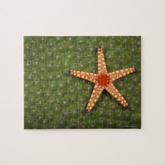 Sea star cleaning reefs by eating algae jigsaw puzzle