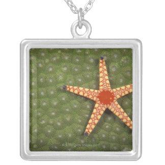 Sea star cleaning reefs by eating algae jewelry