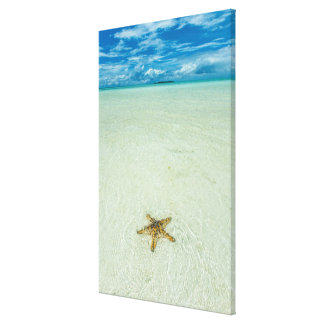 Sea star in shallow water, Palau Canvas Print