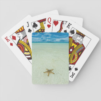Sea star in shallow water, Palau Playing Cards