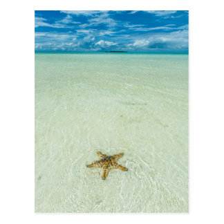 Sea star in shallow water, Palau Postcard