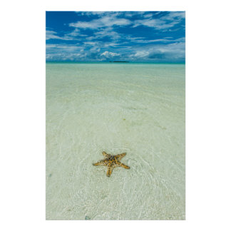 Sea star in shallow water, Palau Poster