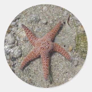 Sea Star Round Stickers