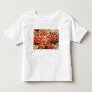 sea star, Scuba Diving at Tukang Besi/Wakatobi Toddler T-shirt