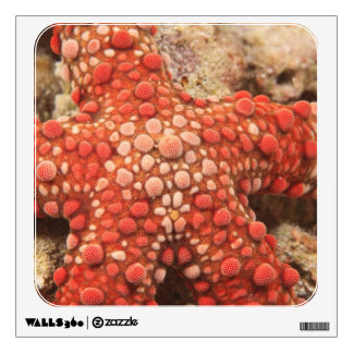 sea star, Scuba Diving at Tukang Besi/Wakatobi Wall Decal