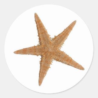 Sea star sticker