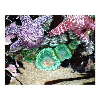 Sea Stars Anemones 4.25x5.5 Paper Invitation Card