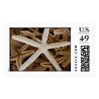 Sea Stars Postage