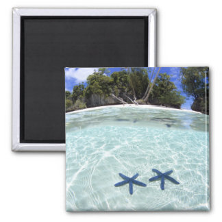 Sea stars, Rock Islands, Palau 2 2 Inch Square Magnet