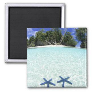 Sea stars, Rock Islands, Palau Magnet