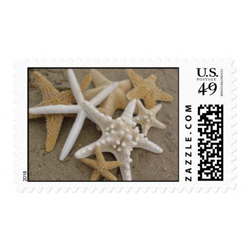 Sea Stars (Starfish) Postage Stamp