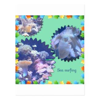 Sea surfing postcard