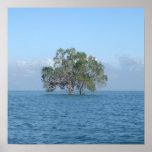 Sea Tree Posters