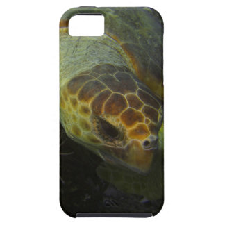 Sea turtle 2 iPhone 5 case