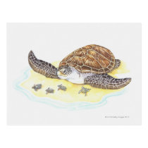 Sea Turtle and Babies Postcard