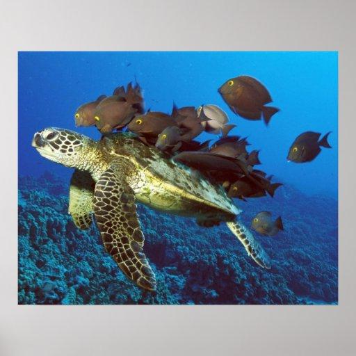 Sea Turtle and Fish Print