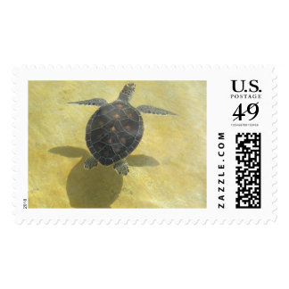 Sea Turtle and Shadow Postage Stamp
