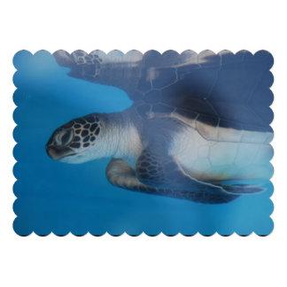Sea Turtle Announcement