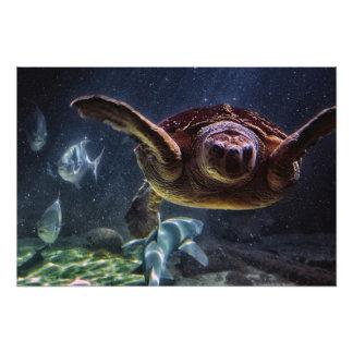 Sea Turtle Aquarium Photo