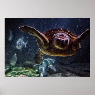 Sea Turtle Aquarium Photo Poster