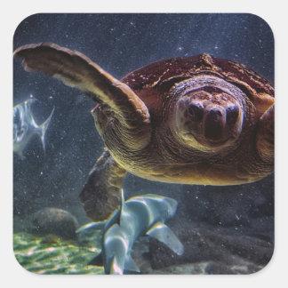 Sea Turtle Aquarium Photo Square Stickers